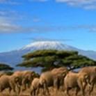 Autotour Au pied du Kilimandjaro