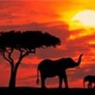 Autotour Safari Swara